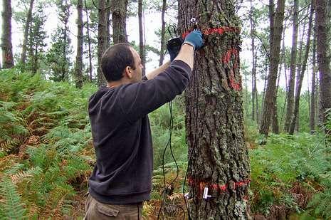 Estudios de la calidad de la madera